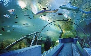 北京海洋馆3